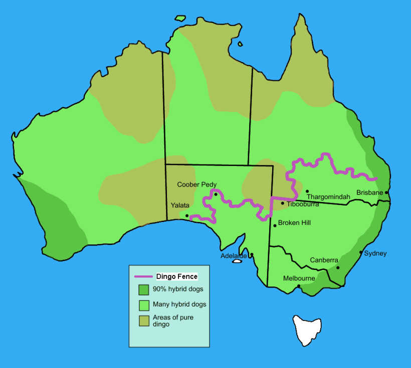 Dingo_fence_in_Australia